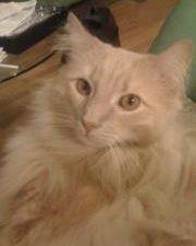 Jack the Cat, missing at JFK.