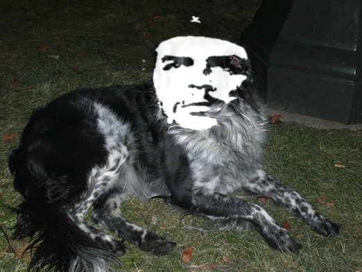 Occupy Denver Elects Border Collie as Protest Leader