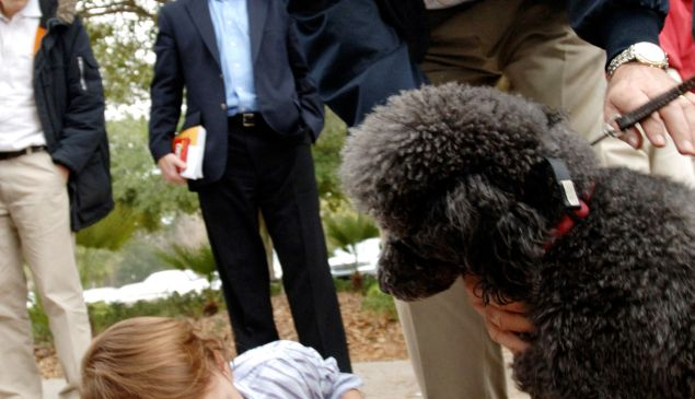 Mitt Romney petting a dog during a campaign stop in 2008. (Photo: Getty)