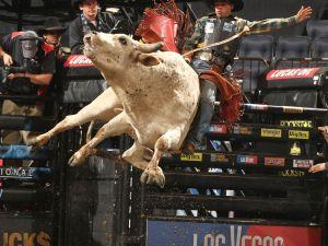 Where are the johdpurs? (Bull Stock Media)