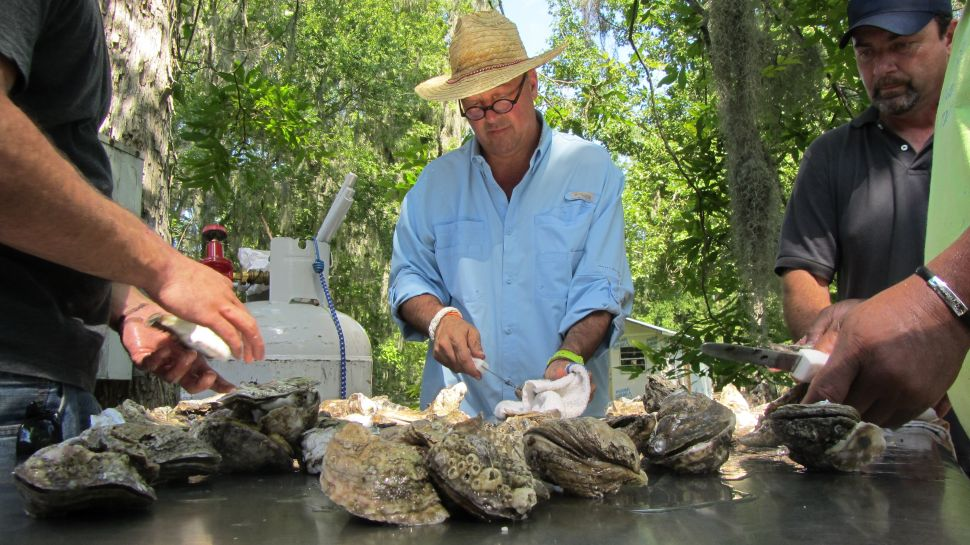 Bizarre Foods' Andrew Zimmern on Herring, Brains, Blood and Other Dinnertime Delicacies