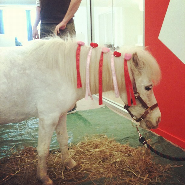 Update: There's a Pony in There Somewhere: Buzzfeed Gets a Miniature Horse for Valentine's Day