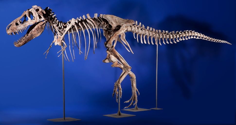 Natural History Auction Offers Chance to Fulfill Lifelong Dream of Owning Tyrannosaurus Skeleton