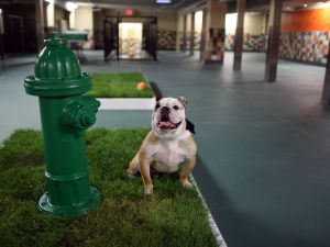 Hold onto that spare key: dogs are taking over apartment buildings.