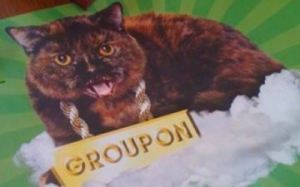 Groupon Cat, pawning his bling.
