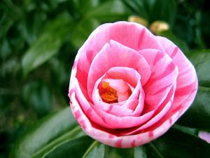 "The Google Image results for ""porn"" are too vile, so here is a ""lady flower."" (Photo: flickr.com/danseprofane)"