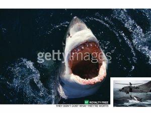 SHARK! (Getty)