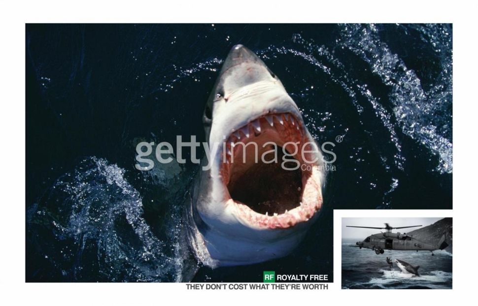 Jaws For Real: Great Whites Strike Fear in Massachusetts Beachgoers