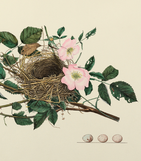 The Fine Feathered Art Of 'America's Other Audubon'