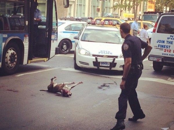 Dog Shot on 14th Street by NYPD Officer: Eyewitness Account [Update]