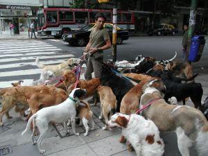 Doggy Mix-Up