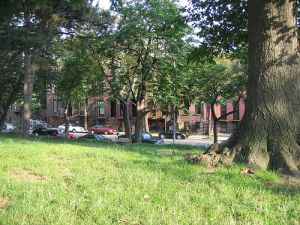 The patchy, ragged grass only adds to Fort Greene's trying but not trying to hard appeal.