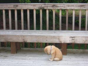 Sad puppy. (utterlycute.com)