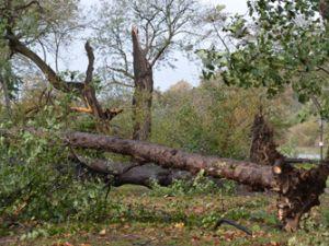 Tree damage in Prospect Park. (Prospect Park Alliance)