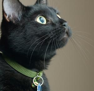 (Photo: Veterinary Practice News)