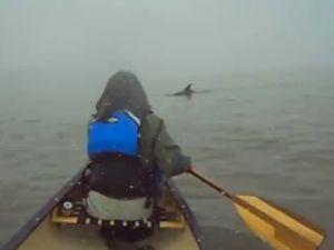 Greenpoint dolphin (YouTube)