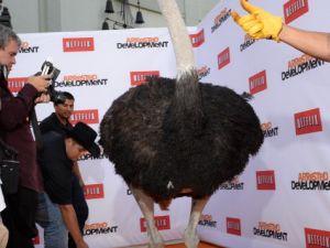 Ostrich. (Photo: Getty Images/Michael Buckner)