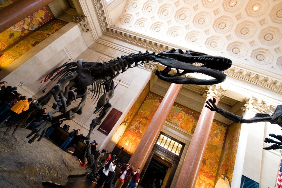 To Do Friday: Night at the Museum