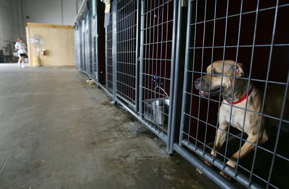 NJSPCA Should Be Stripped of Power, Investigative Agency Says