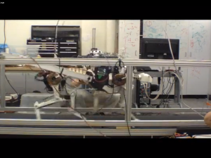 Just try to beat this robo-cheetah on the treadmill.
