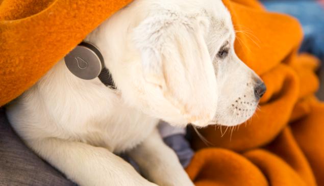 Cyborg pup. (Photo: Whistle)