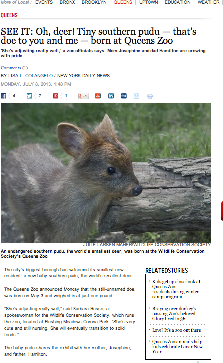 A Baby Deer So Cute, <em>The Daily News</em> Wrote About It Twice