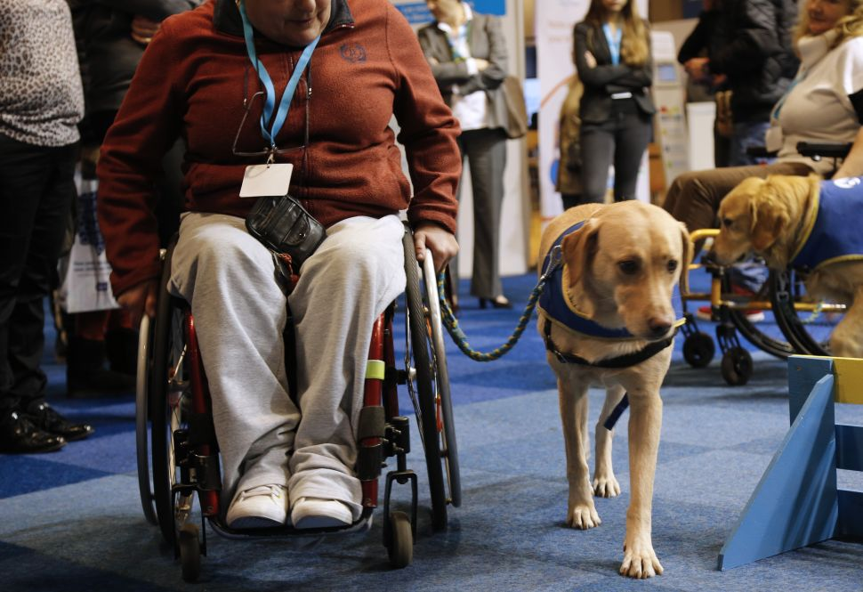 Fake 'Service Dogs' Ease Problems of Completely Able-Bodied New Yorkers