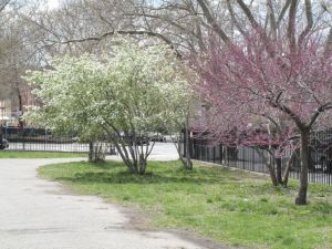 McCarren Park. (NYC Gov Parks website)