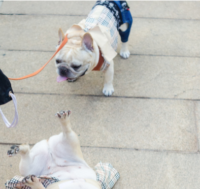 Crowd Control: Long-legged Beauties and Four-legged Friends Take Lincoln Center