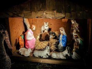Christmas cats. (Photo via RLJR News/DNAInfo.com)