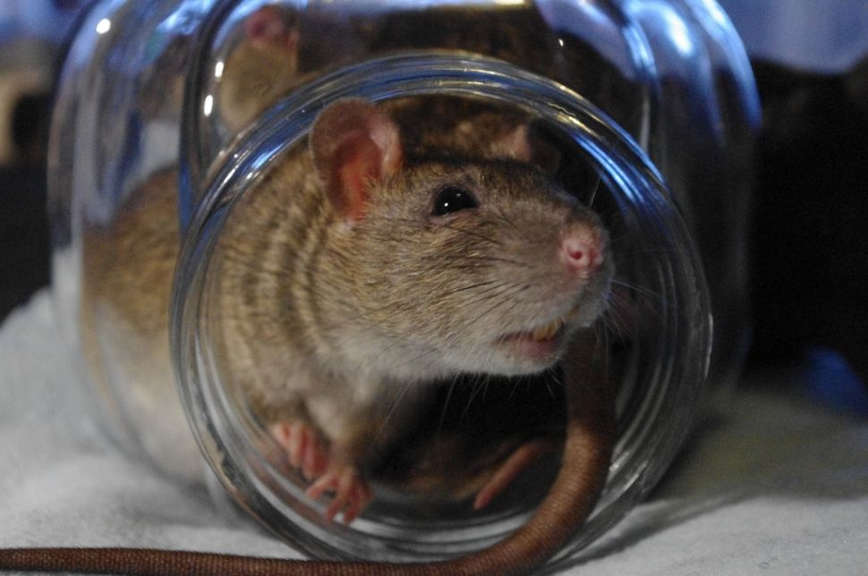 NYC's Rat Information Portal Is Everything You Never Wanted