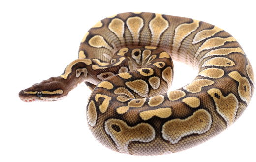 Curious Workers Discover Bag of Snakes Dumped in Garbage