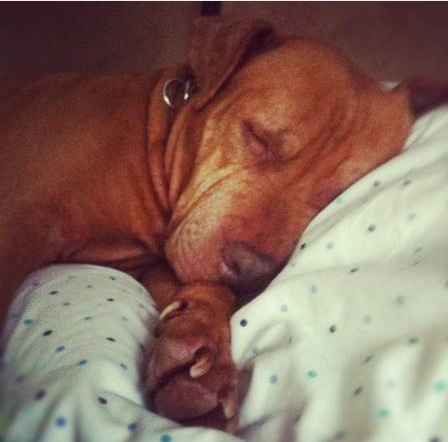 Puppy Love: Woman Reaches Out to Rescue Dog's Former Owners to Pray for Animal's Safe Surgery