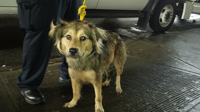 MTA Worker Hopes to Adopt Adorable Pup Who Chased Train Across 2 Boroughs