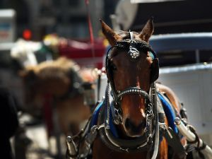 A cute horse in Central Park on Monday. (Getty Images)