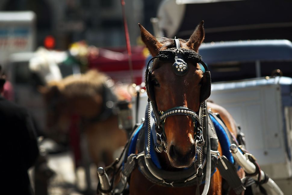 Liam Neeson Neighbor Hopes for More Carriage Horse Protests