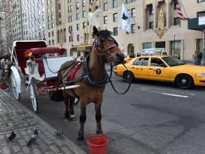 A horse carriage. (Photo: DON EMMERT/AFP/Getty Images)