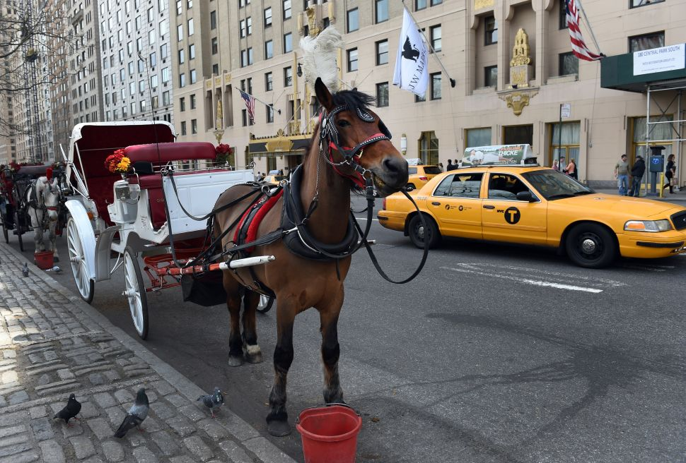 Deceiving Driver Passes Off Old, Sick Carriage Horse For One Who's Young and Healthy