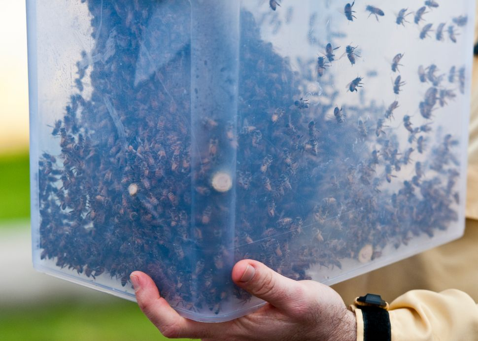 Swarm of 24,000 Bees Besieges Williamsburg Street