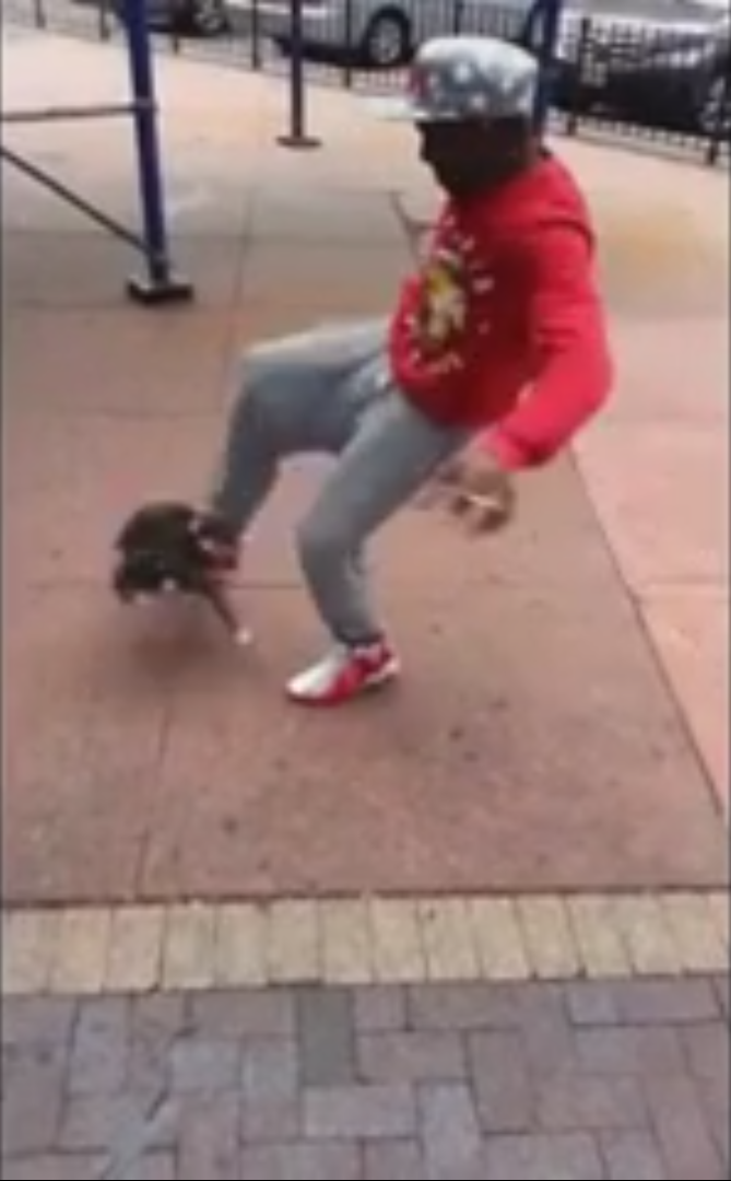 Brooklyn Creep Arrested After Cops Investigate Cat Kicking Video