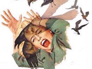 """The Birds: Brooklyn Edition"""