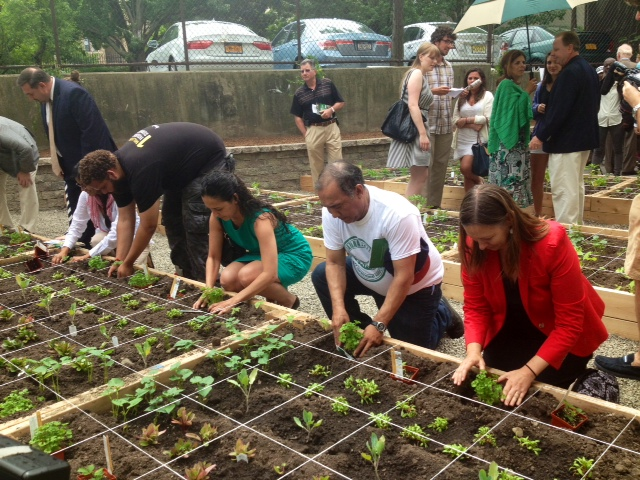 Sweat Equity: Bronx Affordable Housing Group Applies Philosophy to Community Garden