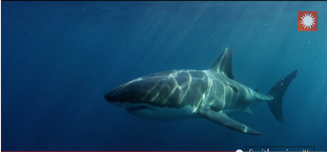 Get Out of the Water! Smithsonian Channel's 'Super Predator' Doc is Terrifying