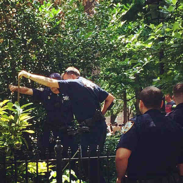 Snake of Conflicting Proportions Discovered in Washington Square Park