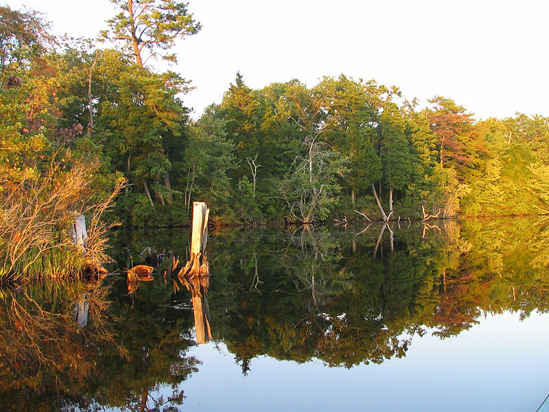 Four ex-Govs. sign letter protesting pipeline through Pinelands