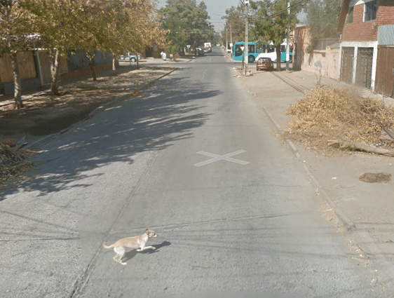 Um, Not to Alarm You But Google's Street View Car Might Have Killed a Dog