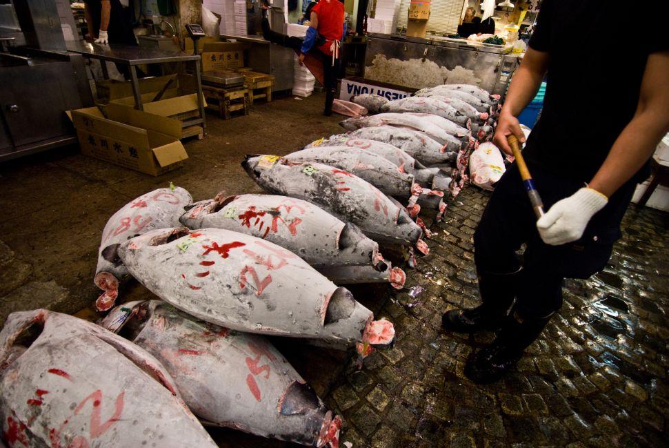 Brooklyn Councilman Alan Maisel Calls to Ban Bluefin Tuna