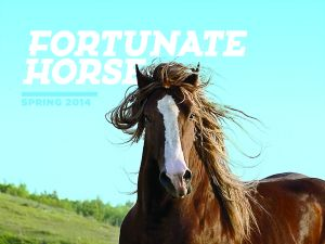 Fortunate Horse believes that all horses are fortunate because they're horses. (photo credit: Fortunate Horse Magazine)