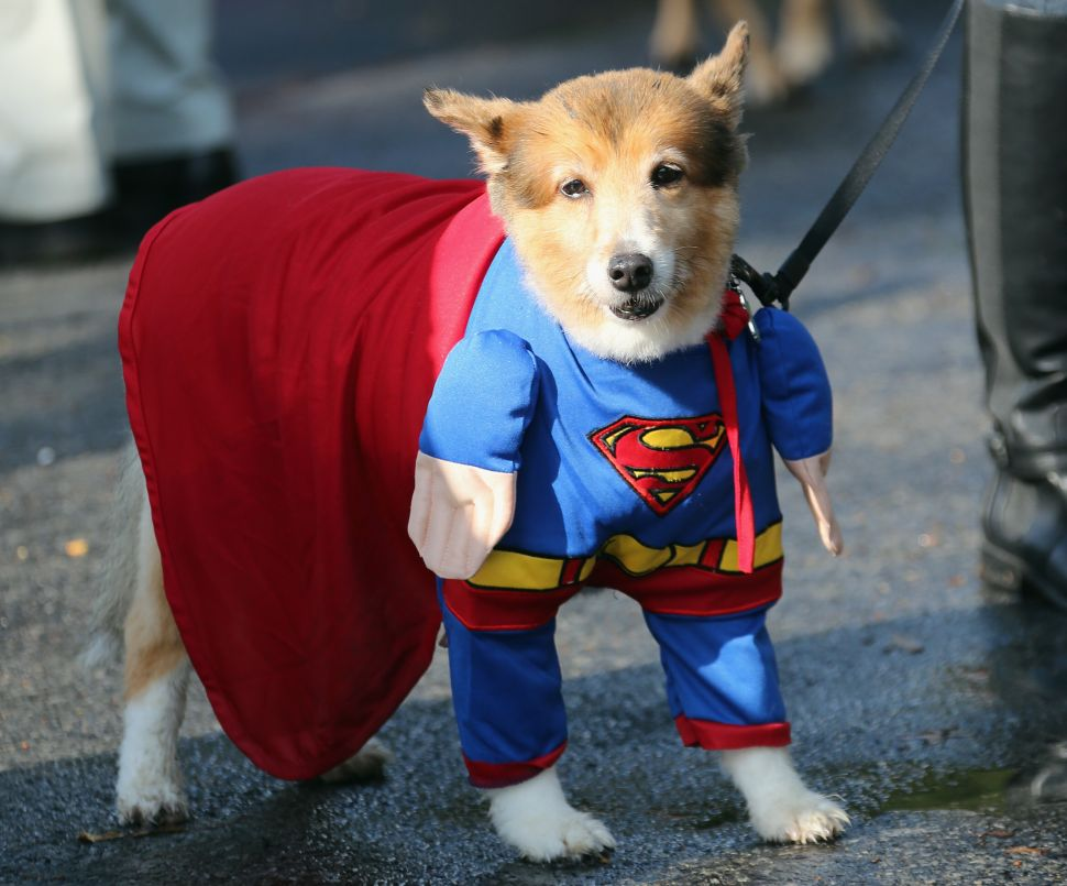To Do This Weekend: A Halloween Dog Parade and Fall Fest at Citi Field
