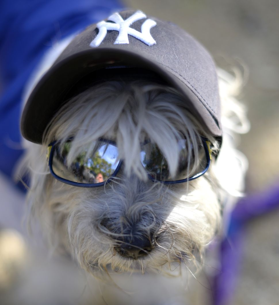Dog Friendly Brooklyn Bar Takes on Health Department Single Handedly